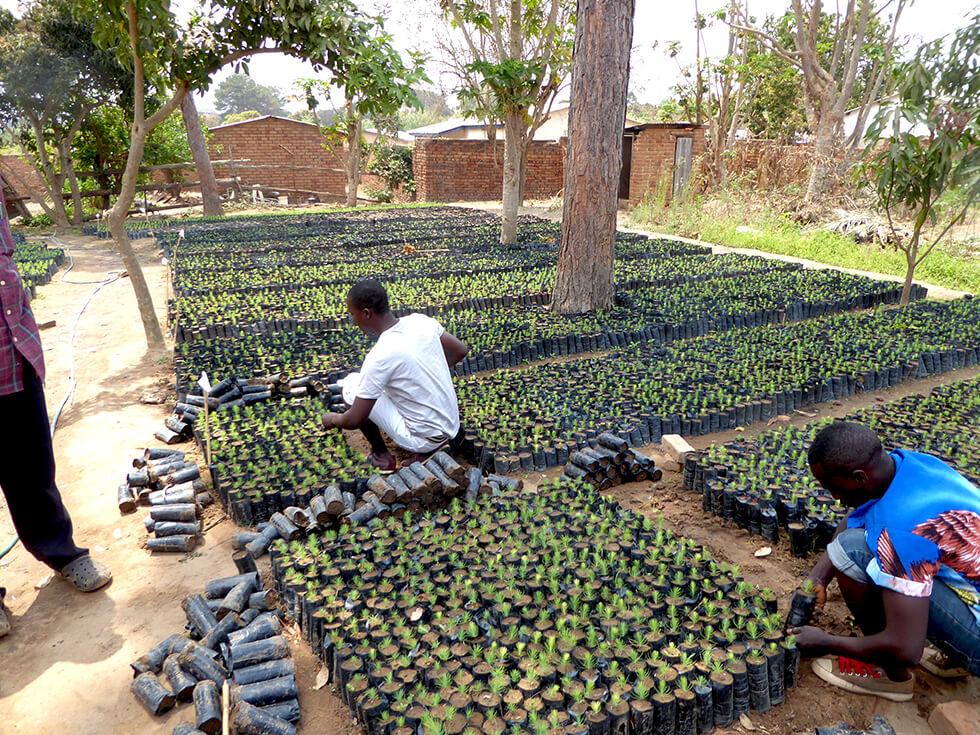 A RIPPLE Africa tree nursery