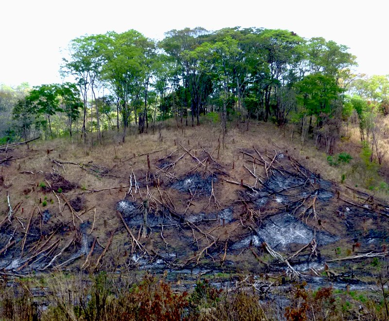 Forest Conservation Malawi Africa