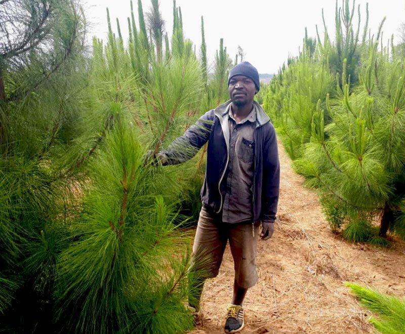 Moses-tree-planting-farmer-Malawi