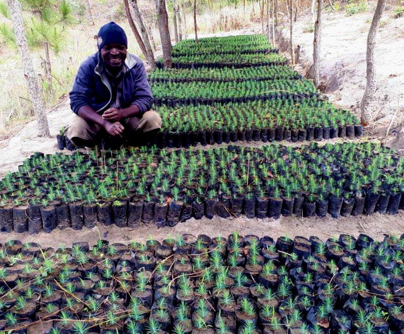 Moses-tree-planting-farmer-Malawi2