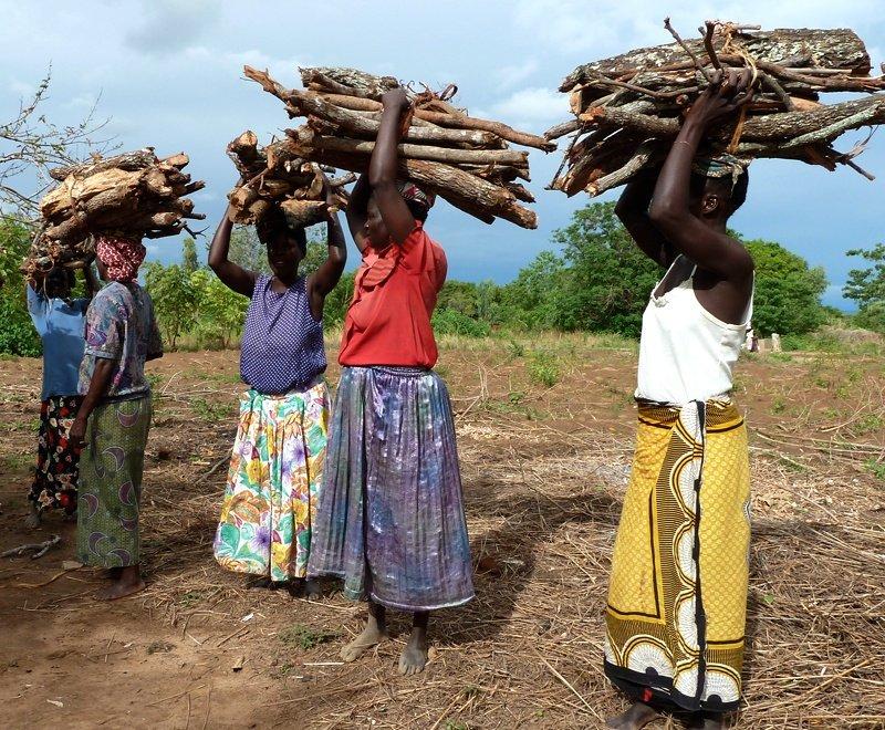 Firewood-malawi-ripple-africa