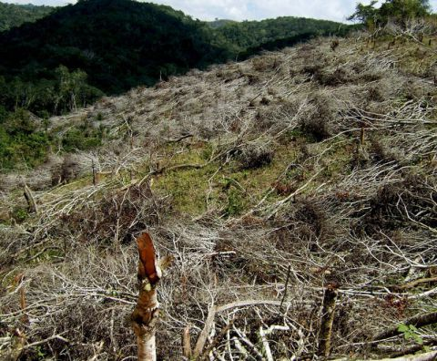 Deforestation in Malawi is one of the environmental challenges facing the country