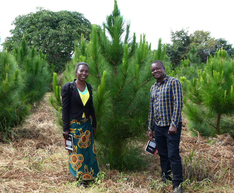 Tree Planting in Malawi, Africa