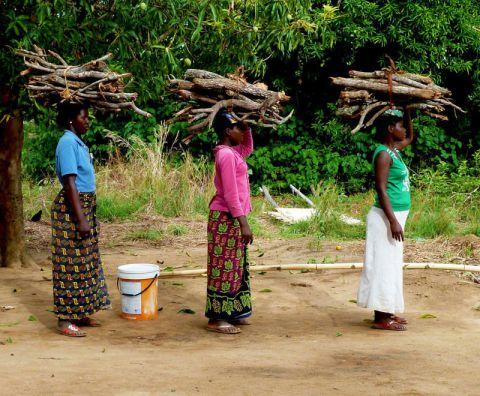 Women carry firewood in Malawi