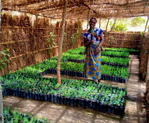 Chisomo stands in her tree nursery with her seedlings in Malawi