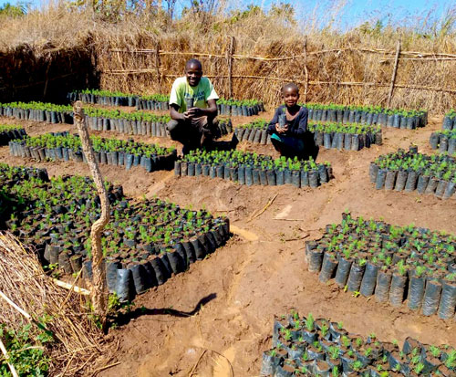 Misheki in his tree nursery in Malawi with his germinated seeds
