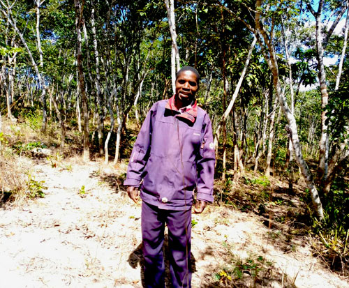 Simon protects an existing forest in northern Malawi