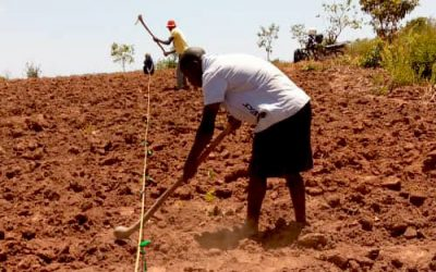 Preparing land for tree planting