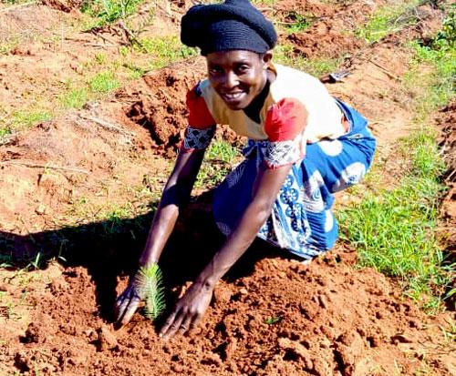 Doreen in Malawi plants a tree