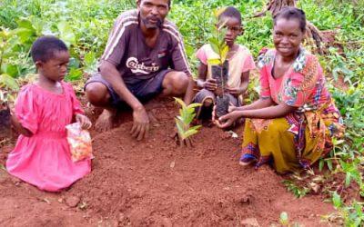 Family fruit tree planting