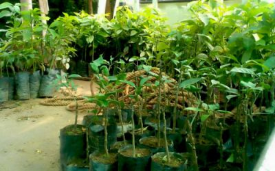 Fruit trees delivered to schools