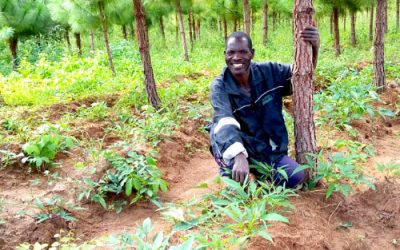 Tree planting for healthcare