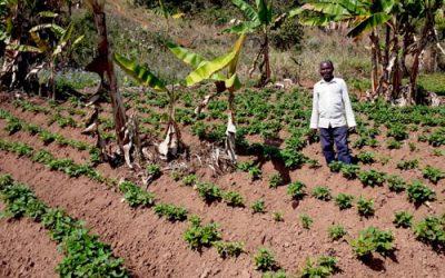 James the lead farmer