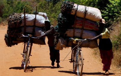 From Charcoal Seller to Conserving Trees