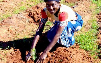 Plant a Tree Christmas Campaign